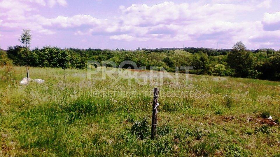 Agricultural land near Višnjan