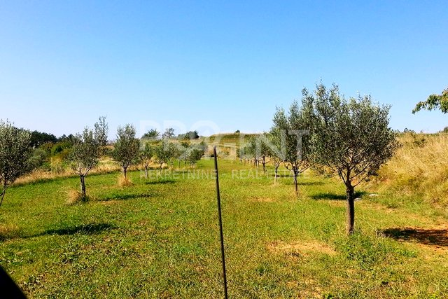 Olive grove with 347 olive trees