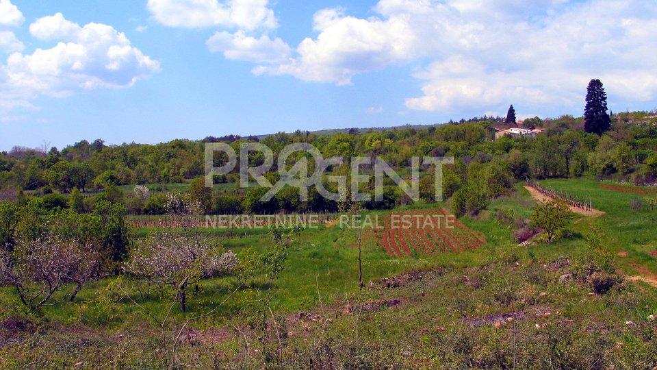 Land, 1628 m2, For Sale, Buzet - Pračana