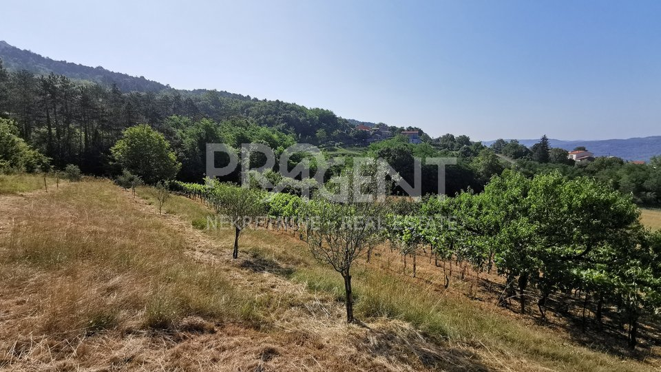 Buzet, stone house and farm with 2.5 ha of land