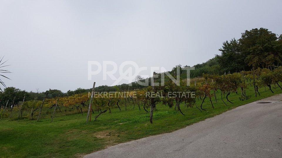 Land, 1704 m2, For Sale, Buje