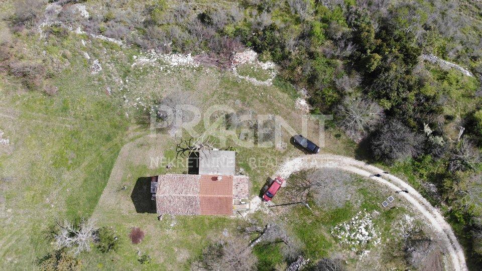 Istra, Grožnjan, kamena kuća s maslinikom